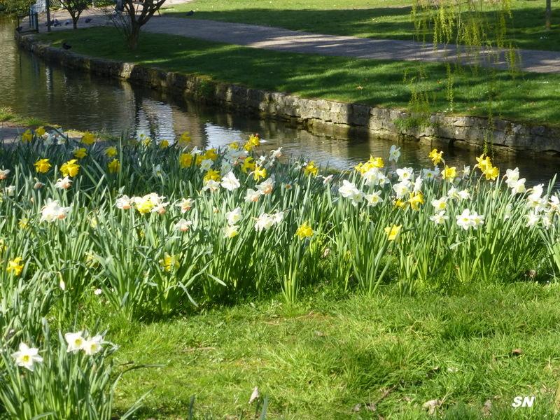 Lac et jardins de dijon for Jardin japonais dijon