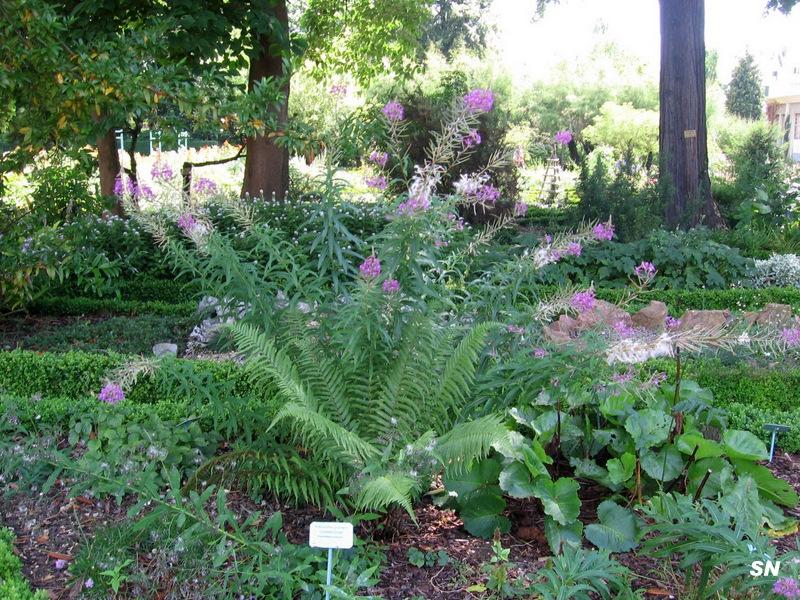 Lac et jardins de dijon page 5 for Jardin japonais dijon